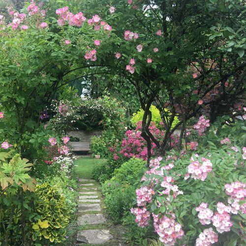 Lush English Garden