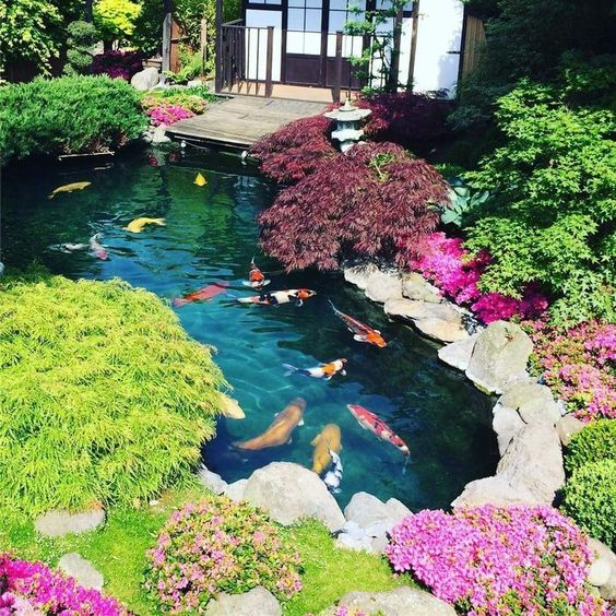 beautiful koi fish for backyard