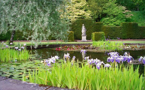 Pond in English garden