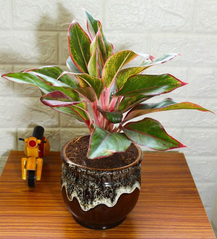 10 Indoors houseplants easy to care