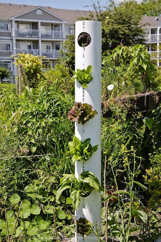 grow vegetable on PVC