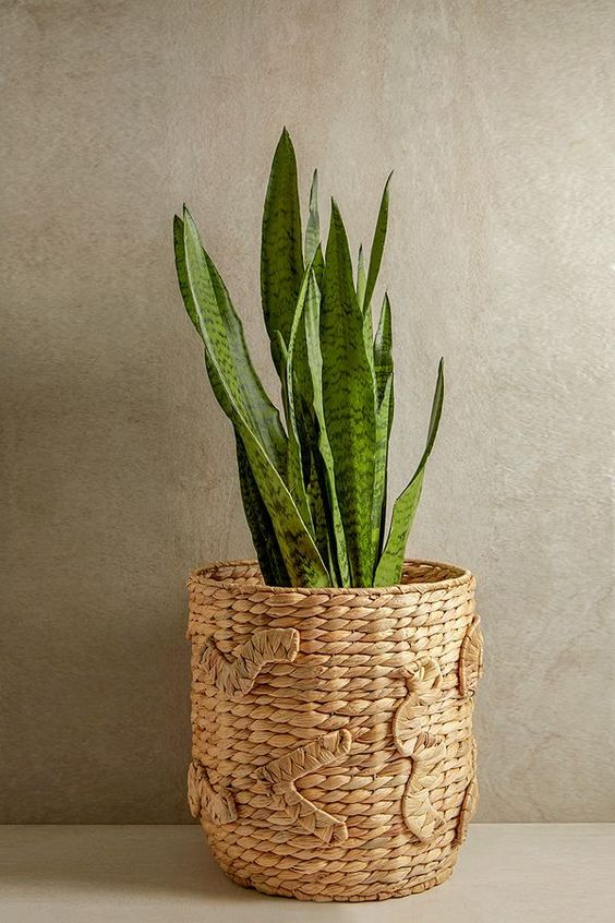 woven plant pot for a tropical room design