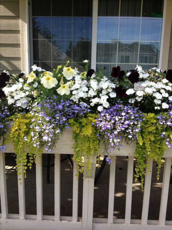 improve curb appeal with window boxes