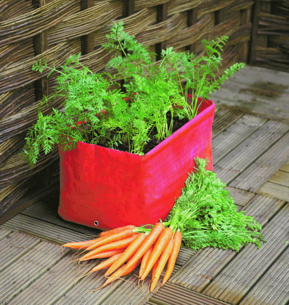 growing carrot in small space