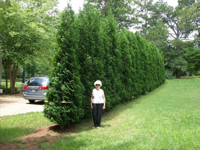 fast growing trees for enchanting your backyard