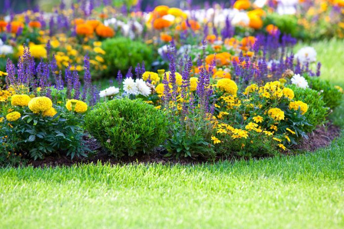 backyard decorating ideas with all year-round plants