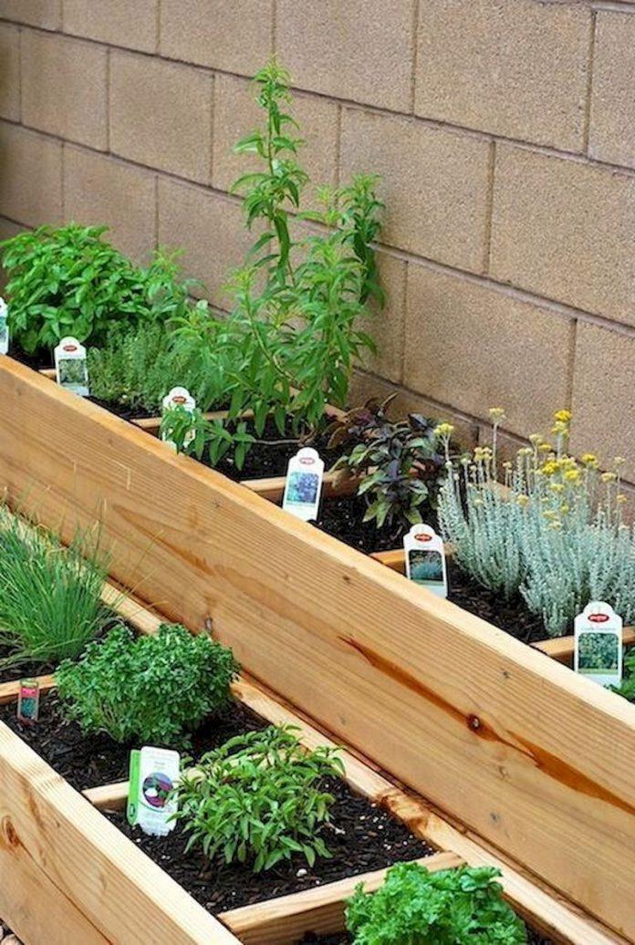 herbs garden for small backyard