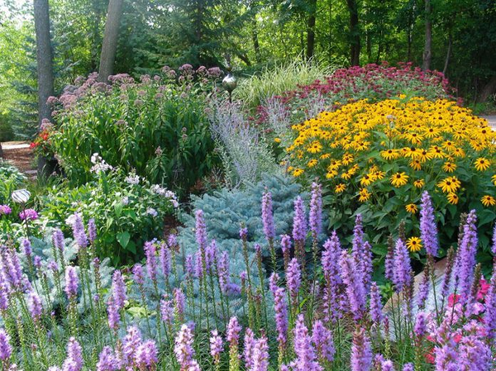 easy and cheap decorative perennials for garden landscaping