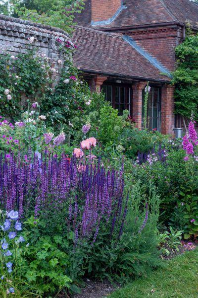 lavender for aromatic garden