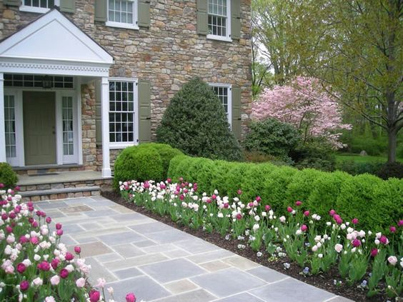 front yard decoration with tulips
