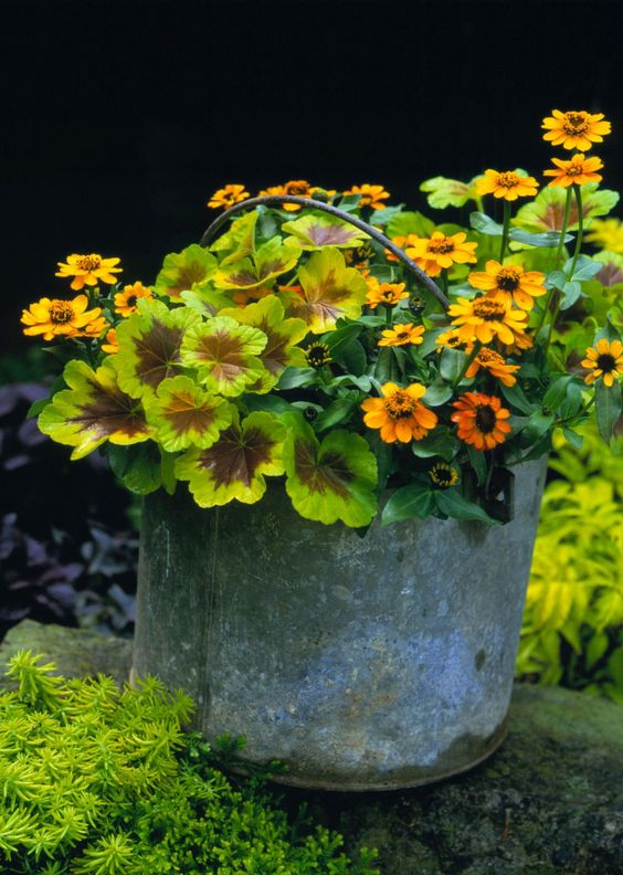 annuals for easy garden landscaping