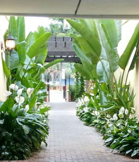 entry way tropical landscape idea
