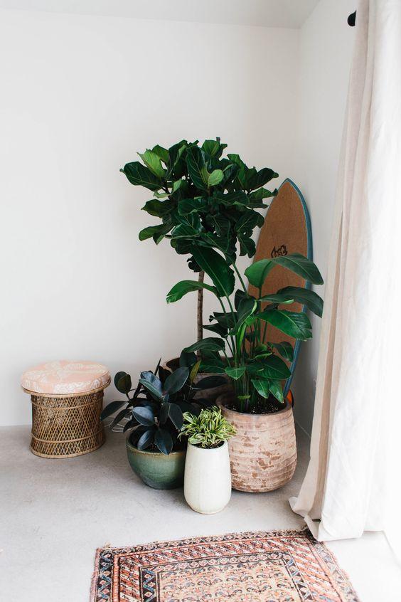 greenery inside tropical home