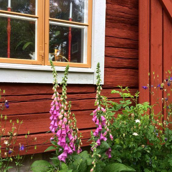 perennials to decorate Scandinavian garden