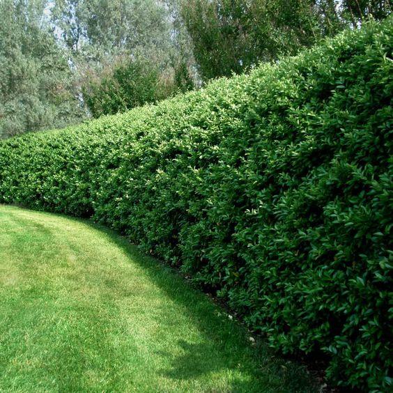 shrubs in Scandinavian landscaping