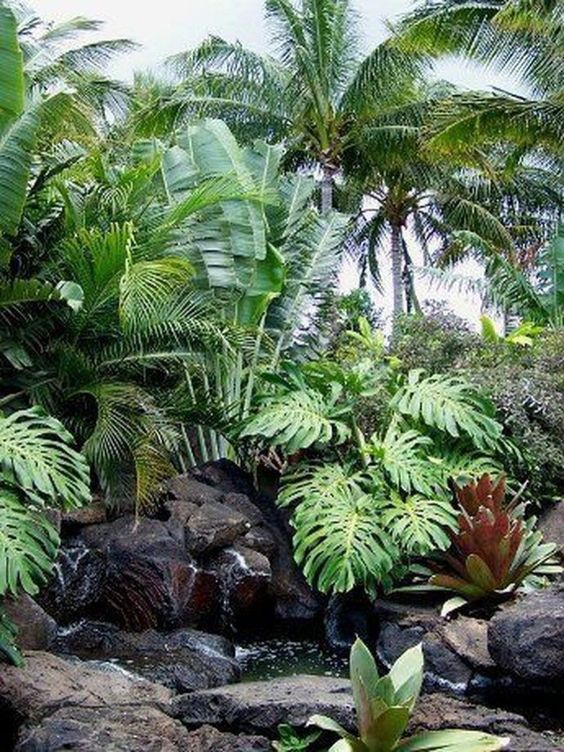 hard tropical landscaping