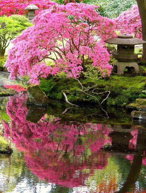Azalea plants to create lush Japanese garden