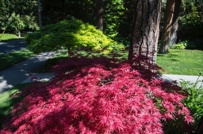 Japanese garden plants to create peaceful shade garden