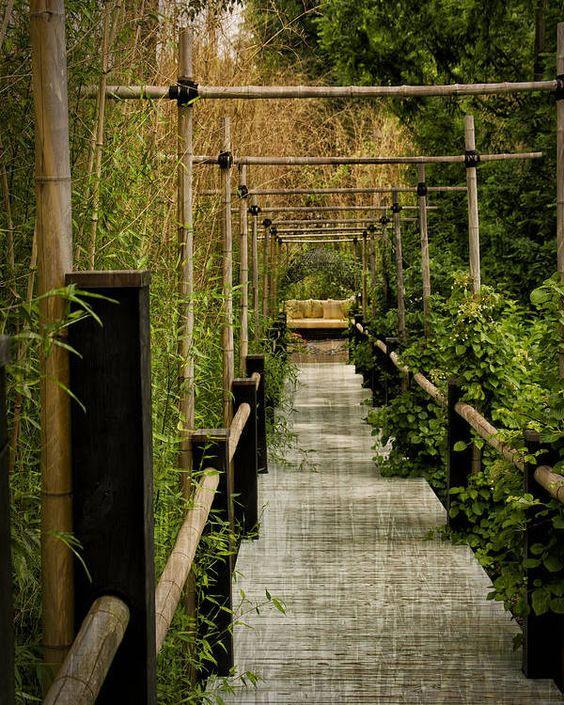 bamboo in Japanese garden