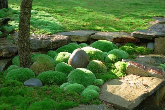 create green space with moss landscaping style