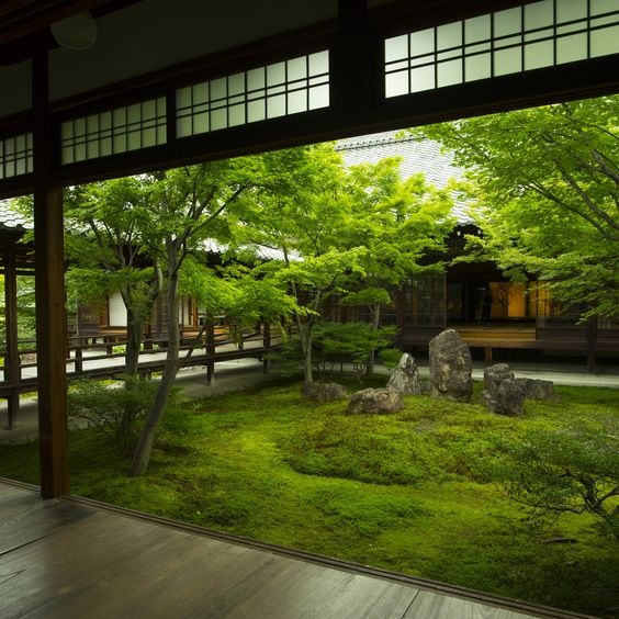 the moss in Japanese garden style