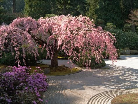 peaceful Japanese garden landscaping style