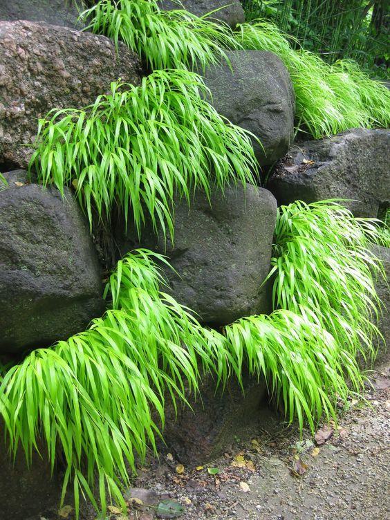 Relaxing Japanese rock garden landscaping with shrubs