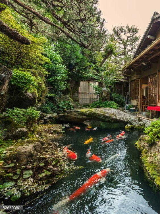 Koi pond Japanese garden idea