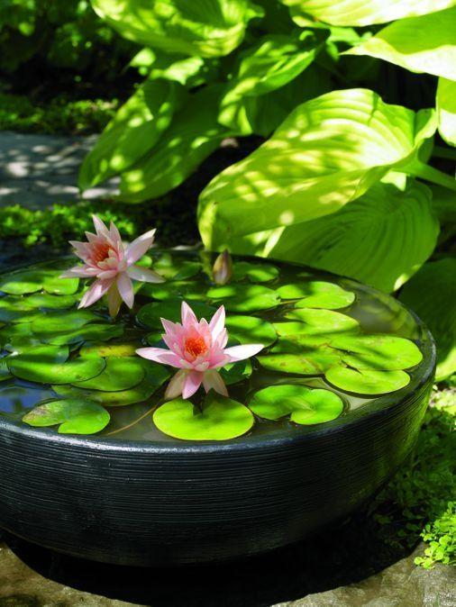lotus pond idea Japanese garden