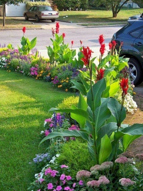 wild flower landscaping on a budget