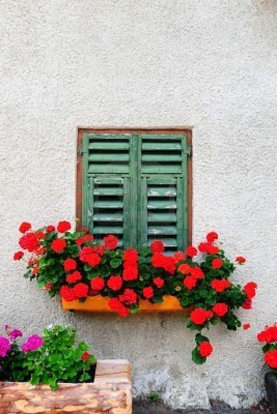 window box decor to improve the curb appeal